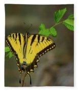Swallow Tail Butterfly Fleece Blanket