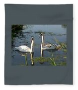 Swans In The Sunshine Fleece Blanket