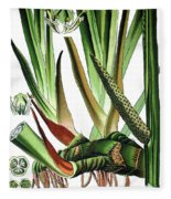 Sweet Flag Or Calamus, Acorus Calamus Fleece Blanket