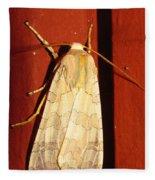 Sycamore Tussock Moth Fleece Blanket