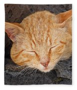 Tabby Fleece Blanket