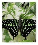Tailed Jay Butterfly #2 Fleece Blanket