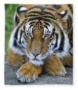 Takin A Break Tiger Fleece Blanket