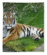 Takin It Easy Tiger Fleece Blanket