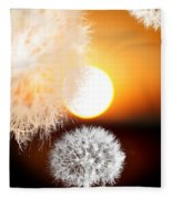 Taraxacum Sunset Fleece Blanket