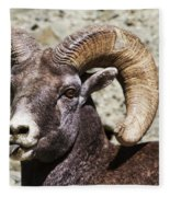 Taunting Bighorn Fleece Blanket
