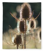 Teasle In Morning Light Fleece Blanket