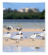 Terns At Fort Myers Fleece Blanket