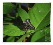 Terrific Eyespots On A Owl Butterfly On Leaves Fleece Blanket