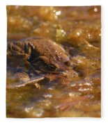 The Common Toads 2 Fleece Blanket
