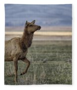The Cow Elk Fleece Blanket