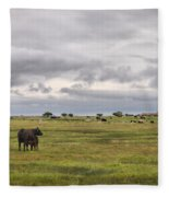 The Cows Of Ottenby 1 Fleece Blanket