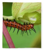 The Gulf Fritillary Caterpillar  Fleece Blanket