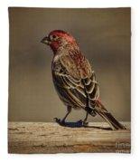 The House Finch Fleece Blanket
