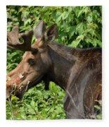 The Hungry Moose Fleece Blanket