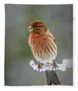 The Red Finch Fleece Blanket