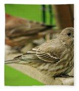 Two Finch's Fleece Blanket