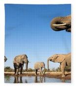 Thirsty Elephants Fleece Blanket