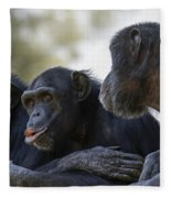 Three Chimpanzees Socializing  Fleece Blanket