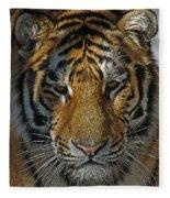 Tiger 5 Posterized Fleece Blanket
