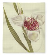 Tiger Flower   Tigridia Pavonia Alba Fleece Blanket