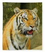Tiger Stare Fleece Blanket