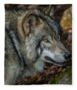 Timber Wolf Picture - Tw417 Fleece Blanket