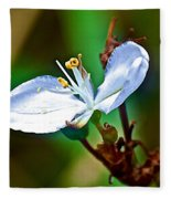 Tiny White Wildflower In Vicente Perez Rosales National Park Near Puerto Montt-chile  Fleece Blanket