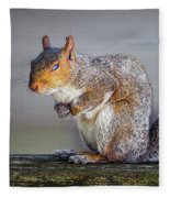Tired Squirrel And Fly Fleece Blanket