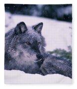 T.kitchin, 19552c Gray Wolf, Winter Fleece Blanket