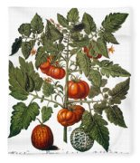 Tomato & Watermelon 1613 Fleece Blanket