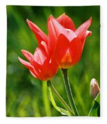 Toronto Tulip Fleece Blanket