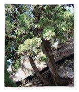 Tree Growing Through Wall Fleece Blanket