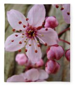 Trees Art Prints Canvas Pink Blossoms Spring Blue Sky Baslee Troutman Fleece Blanket