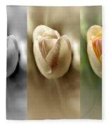 Tri Color Trio Fleece Blanket