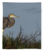 Tri-colored Heron In The Morning Light Fleece Blanket