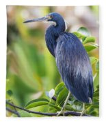 Tri-colored Heron On A Branch  Fleece Blanket