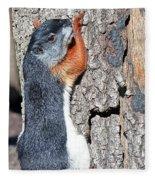 Tricolored Squirrel Fleece Blanket