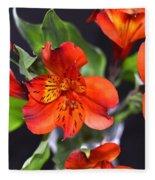 Trio Of Alstroemeria Inca Flowers-4 Fleece Blanket