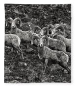 Trophy Rams Fleece Blanket