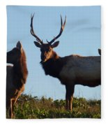 Tule Elk Bull And Harem Fleece Blanket
