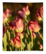 Tulips In Public Garden Fleece Blanket