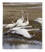 Tundra Swans Alberta Canada 3 Fleece Blanket
