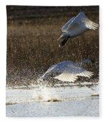 Tundra Swans Take Off 2 Fleece Blanket