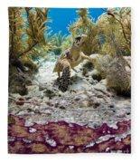 Turtle Red Carpet Fleece Blanket