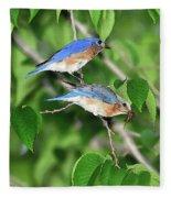 Two Eastern Bluebirds Fleece Blanket