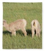 Two Ewes In The Badlands Fleece Blanket