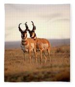 Two Male Pronghorn Antelopes In Alberta Fleece Blanket