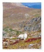 Two Mountain Goats On Mount Bierstadt In The Arapahoe National Fores Fleece Blanket