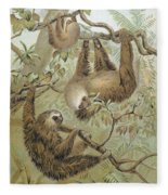 Two-toed Sloth Fleece Blanket